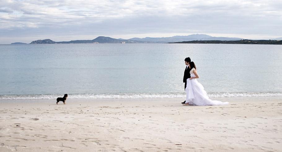 lo scatto perfetto dell'incontro degli sposi con un cano su una spiaggia della costa smeralda